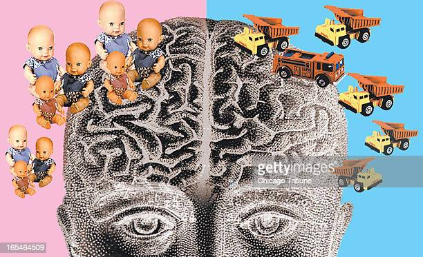 3 col x 35 in / 146x89 mm / 497x302 pixels Mike Miner color illustration of gender and the human brain