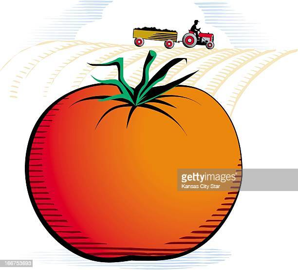 5 col x 875 in / 246x222 mm / 837x756 pixels Gentry Mullen color illustration of a ripe tomato with a farmer on a tractor in the background