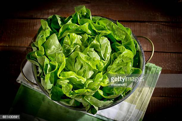 colander with butterhead lettuce - green salad stock pictures, royalty-free photos & images
