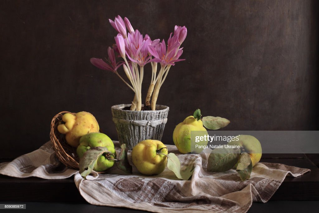 Colchicum And Quince Quintet : Stock-Foto