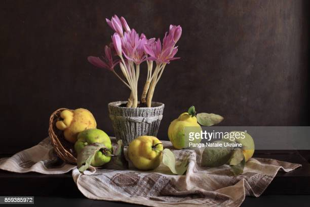 colchicum and quince quintet - nature morte photos et images de collection