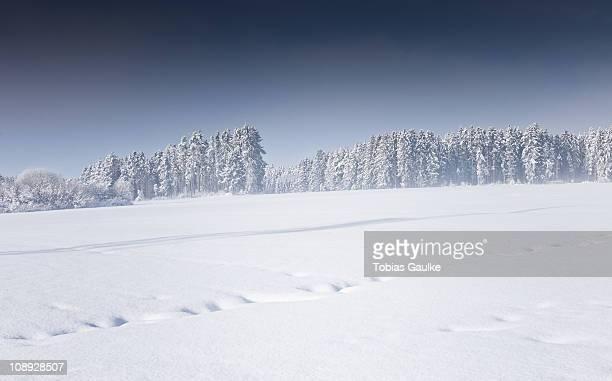 cold day in the sun - tobias gaulke stock-fotos und bilder
