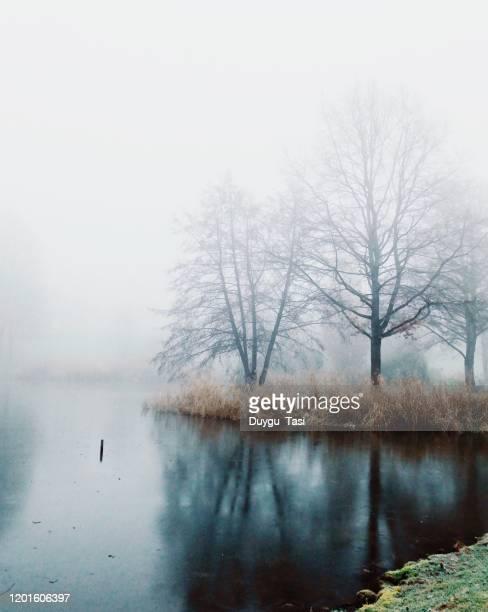 cold days - tierbauten stock-fotos und bilder