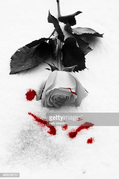 cold love - blood love stock photos and pictures