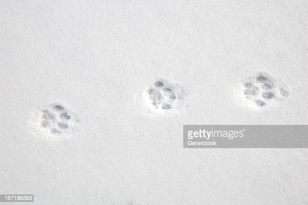 paws fría de invierno textura de serie