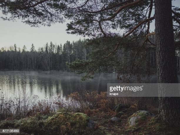 Cold photograph of scandinavian norther europe nature landscape by a lake winter time