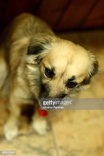 coles up of dog  - mizanur rahman stock pictures, royalty-free photos & images