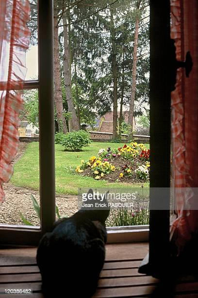 Colette's garden in Saint Sauveur France cat looking at Colette's garden