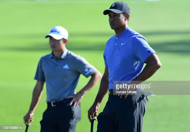 Colin Morikawa and Tiger Woods wait to putt on the 10th green during the first round of the Farmers Insurance Open at Torrey Pines North on January...