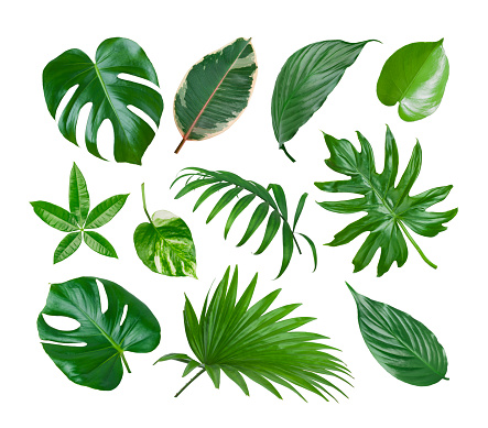Collage of exotic plant green leaves isolated on white background 946034790