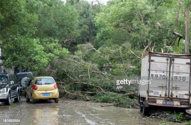 A collapsed tree blocked a street in Shantou south China's Guangdong province on September 23 2013 after Typhoon Usagi landed in GuangdongTyphoon...