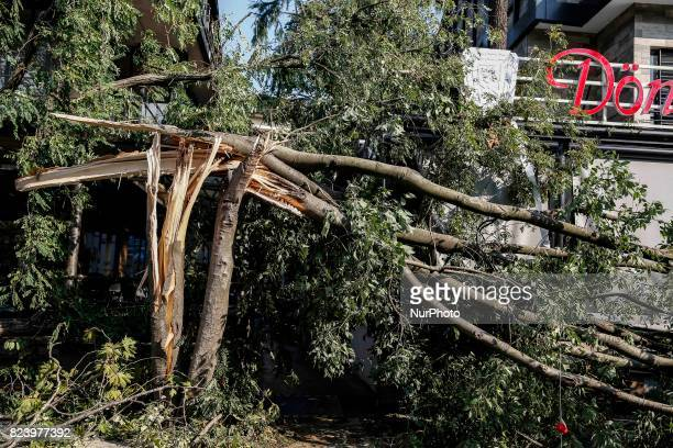 A collapsed tree is seen during a heavy torrential rainfall along with a storm in Istanbul Turkey on July 27 2017 The rain and storm that was...