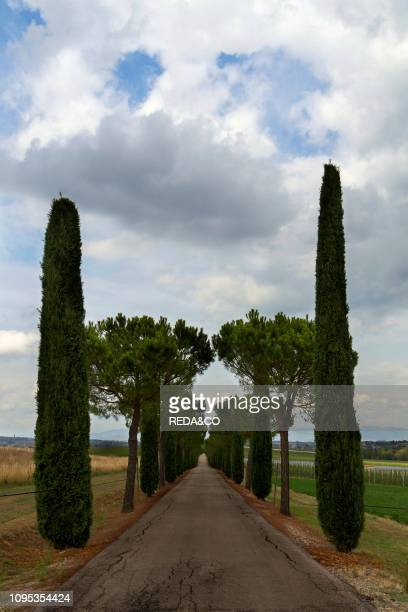 Collazzone Farm Treelined avenue Paciano Umbria Italy Europe