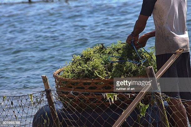 Collect the seaweed