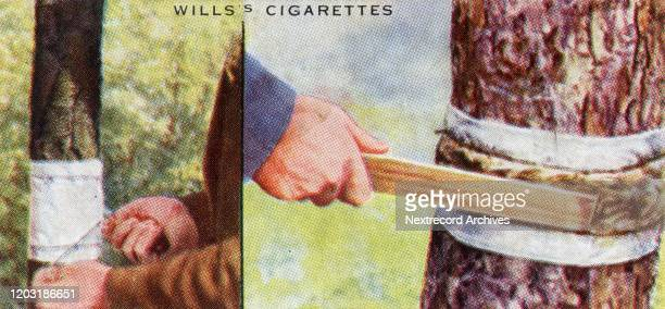 Collectible tobacco card published by British tobacco manufacturer Will's Cigarettes in 1938 in a series titled 'Garden Hints' depicting how to...