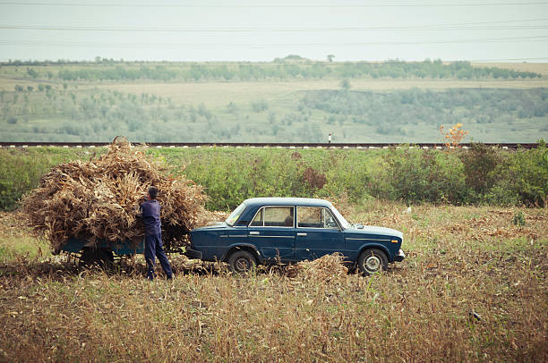 Collecting Corn With A Lada, Moldova Wall Art