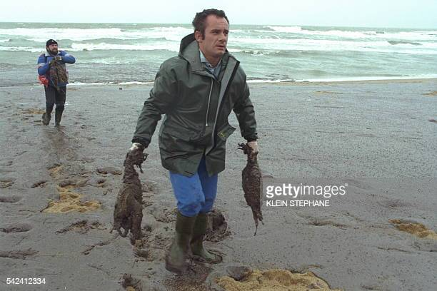 Collecting dead birds from the slick on the beach at BatzsurMer near Le Croisic