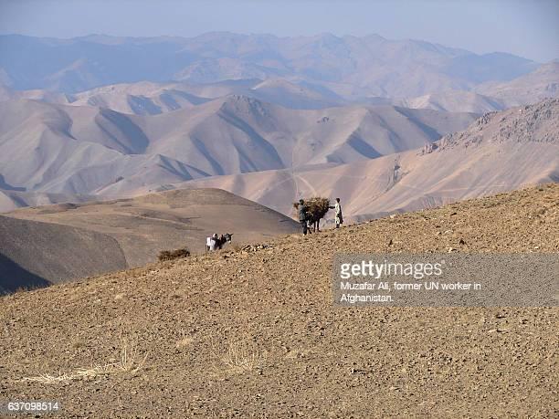 collecting firewood - afghanistan war stockfoto's en -beelden