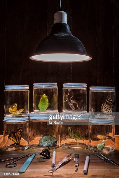 collecting jars - ian gwinn stock photos and pictures