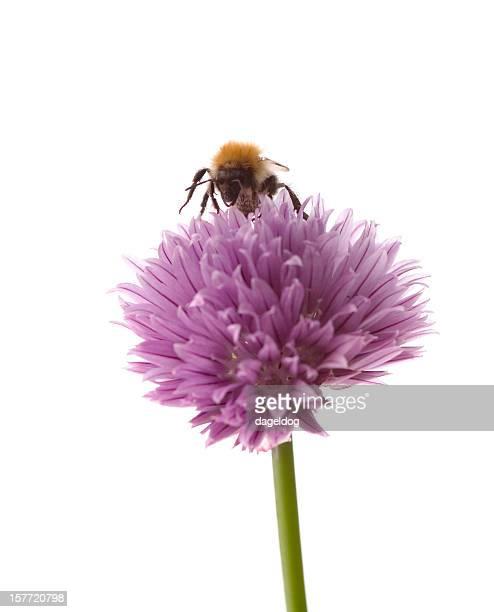Recueillir le pollen