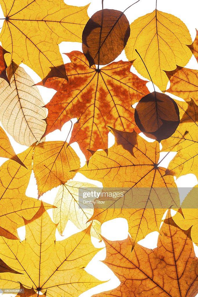 Coleção bela folhas de outono colorido : Foto de stock