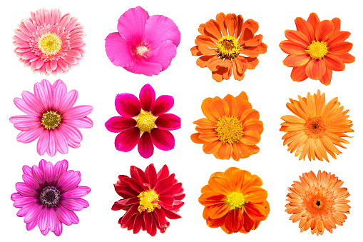 collection flower isolated on white background 988100522