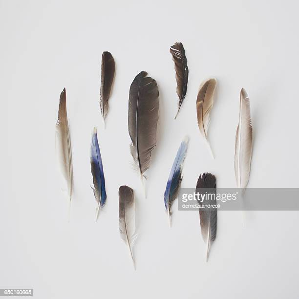 Collection of bird feathers