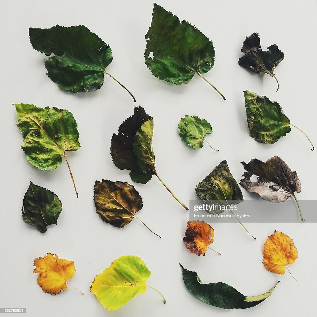 Collection Of Dry Leaves : Foto stock