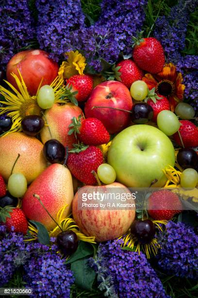 collection of fruits and summer flowers - peach flower stockfoto's en -beelden