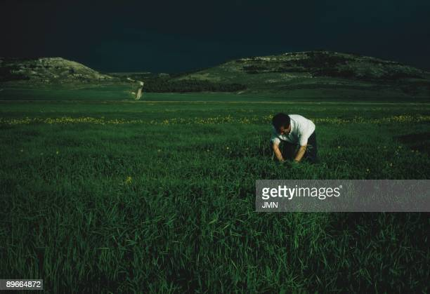 Collection of grass A man picks up undergrowths of grass in a field of San Cebrian de Mazote Valladolid province