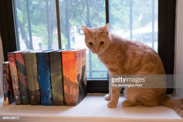 A collection of Harry Potter books are pictured at the home of Caitlin Moore in Washington DC Her cat Dudley sits near the books