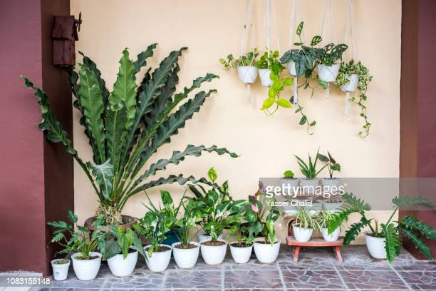 collection of houseplant - tropical bush stock pictures, royalty-free photos & images