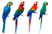 Collection of macaw birds, blue and gold, green-winged, scarlet