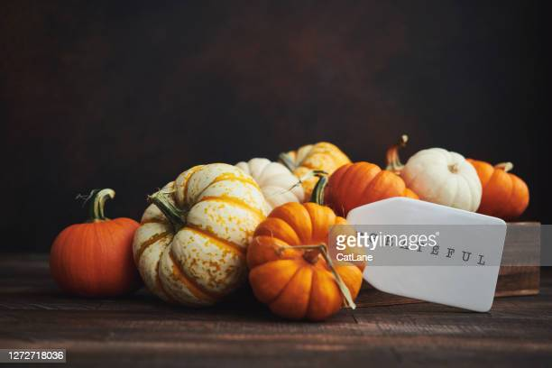 collection of miniature pumpkins in wooden crate with grateful message for fall and thanksgiving - gratitude stock pictures, royalty-free photos & images