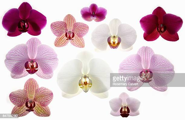 Collection of orchid flowers.