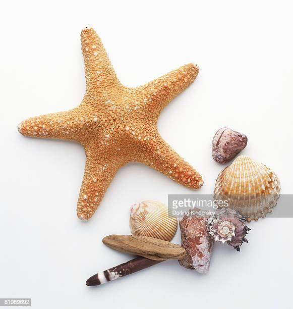 Collection of sea shells and a starfish