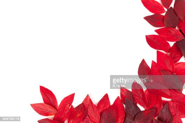 collection of tree leaves isolated on white background - new cherry stock pictures, royalty-free photos & images
