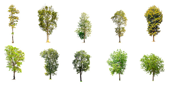 Collection of trees isolated 1087689596