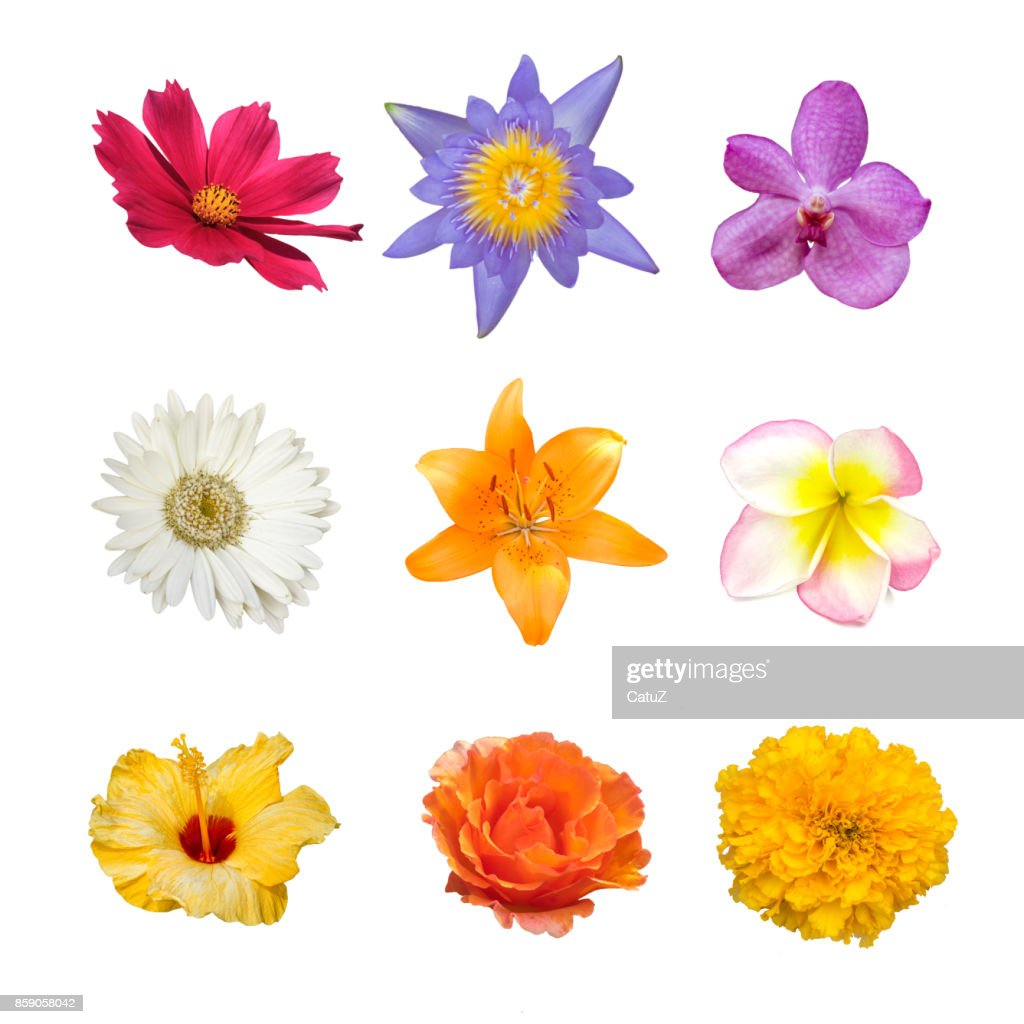 Collection Of Various Red Orange White Pink Violet And Yellow Flower