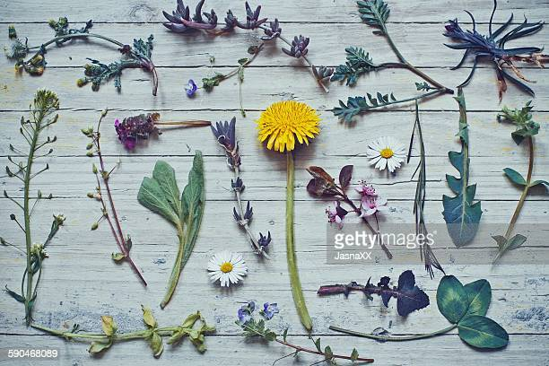 Collection of wild flowers on a table