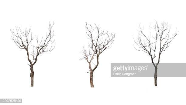 collections bare tree against white background - twijg stockfoto's en -beelden
