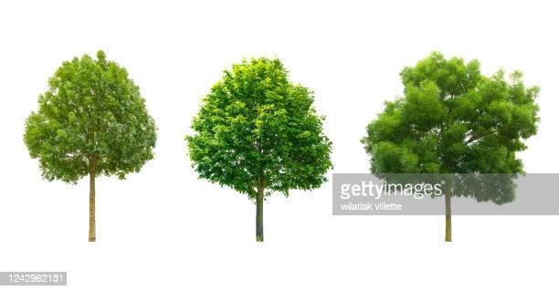 collections green tree isolated. green tree isolated on background. - boom stockfoto's en -beelden