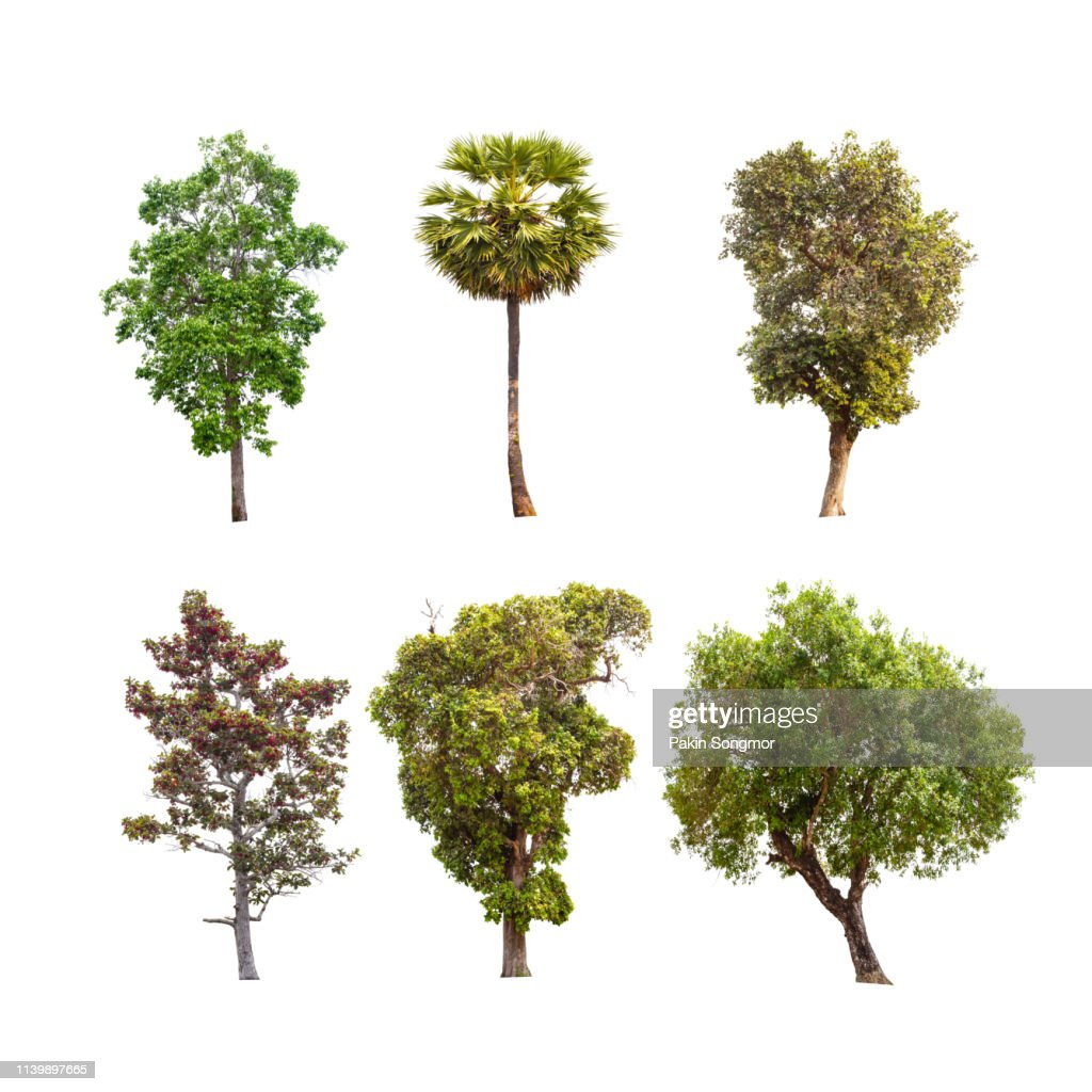 Collections green tree isolated. green tree isolated on white background. : Stock Photo
