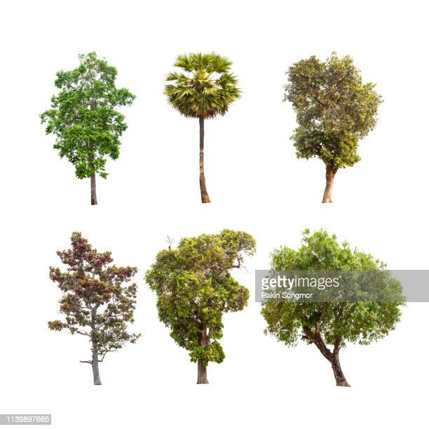 collections green tree isolated. green tree isolated on white background. - bush stock pictures, royalty-free photos & images