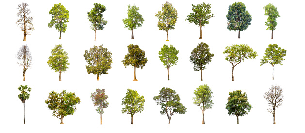 collections green tree isolated. green tree  isolated on white background. 678387600