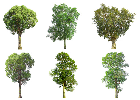collections green tree isolated. green tree  isolated on white background. 912873138