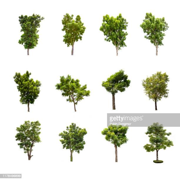 collections green tree isolated on white background. - bush stock pictures, royalty-free photos & images