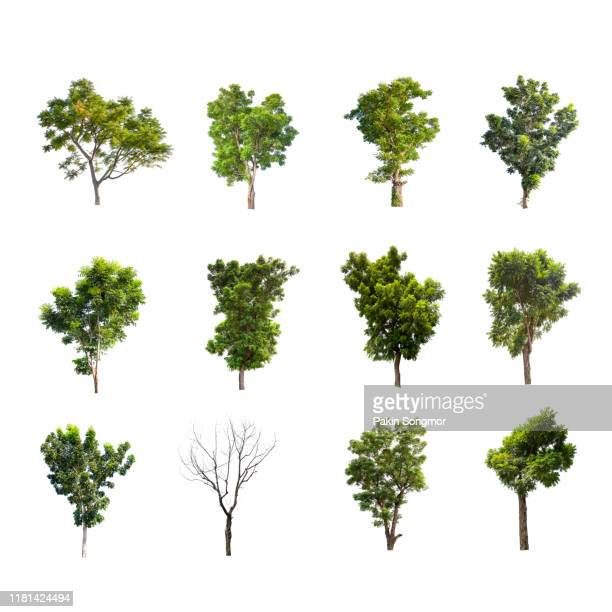 collections green tree isolated on white background - tree stock pictures, royalty-free photos & images