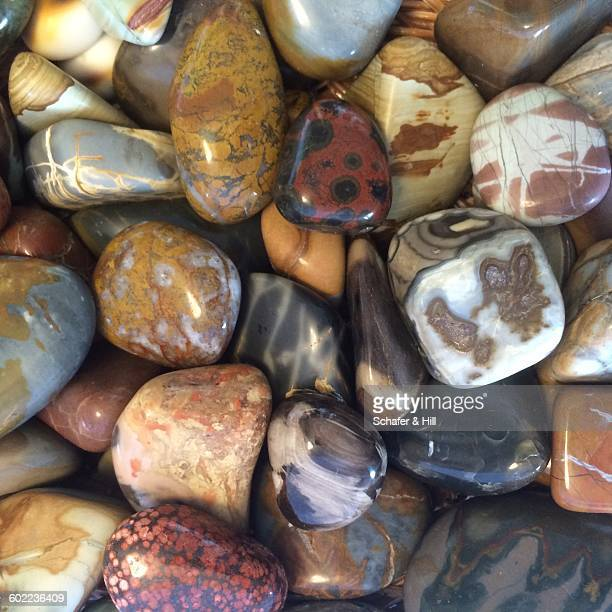 collections - petrified log stock pictures, royalty-free photos & images