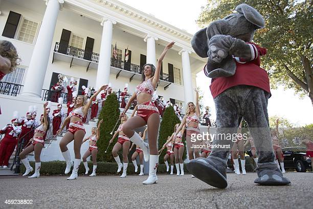Alabama cheerleaders and marching band during pep rally before game vs Mississippi State at President's Mansion on UA campus Tuscaloosa AL CREDIT...